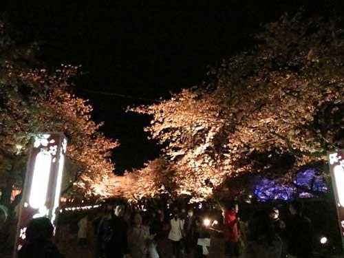 高田夜桜1.jpg