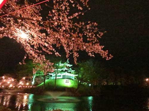 高田夜桜4.jpg